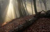 Grafheuvel - Ancestral mound