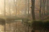 Bosven, herfst - Forest fen, autumn 2