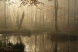 Bosven, herfst - Forest fen, autumn 1