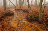 Mistig sprengenbos - Red brook, fog