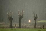 Hagelbui - Hailstorm