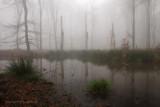 Forest fen - Bosven