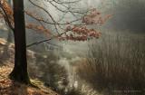 Winterochtend in het bos