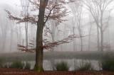 Bosven, mist - Forest fen, fog