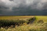 Raincloud - Regenwolk
