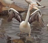 Waterbirds Feeding