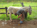 Farrier Day @ the Good Samaritan Donkey Sanctuary