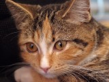 Meeka the magnificent... magical... mischievous moggy!!