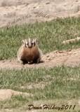 Wildlife in Piceance/East Douglas Area