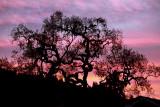 Sunset and Oaks.jpg