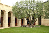 Opus One cloister and olive tree.jpg