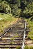curving train tracks into trees.jpg