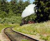 steam engine coming out of trees.jpg