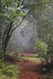 Old Grove Redwoods