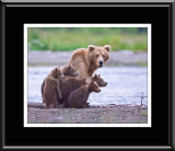88061 Grizzly Sow with Cubs (unframed)