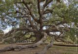 N_112364 - Treaty Oak