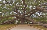 N_112380 - Treaty Oak