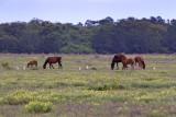 M4_02645 - Wild Horses