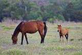 M4_02544- Wild Horses