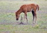 M4_02606 -  Wild Horses
