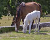 M4_02807- Wild Horses