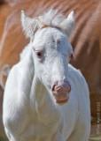 M4_02826- Wild Horses
