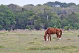 M4_02524- Wild Horses