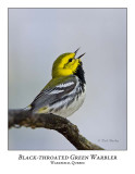 Black-throated Green Warbler-010