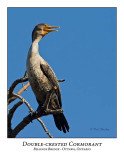 Double-crested Cormorant-009
