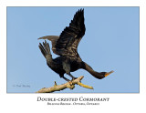 Double-crested Cormorant-010