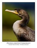 Double-creasted Cormorant-001