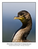Double-crested Cormorant-003
