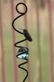 Hummingbird Merry-go-round