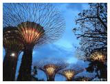 Giant 'tree' near Marina Sand