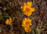 yellow-sunflower02.jpg
