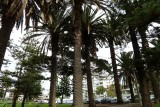 In the Park - Cronulla