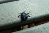 Bug - on the park bench