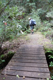 Footbridge on Sassafras Gully Track