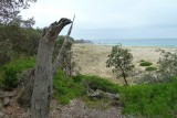 Pinnacle beach - Ben Boyd Nat park