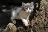 The Cats of Finca Hijuela 2011-06