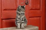 The Cats of La Palma 2011-11