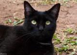 The Back Yard Cat