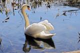 Swan's Display