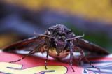 Moth In my mother's garden