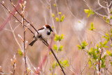 Sparrow on a cold April's day
