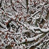 A winter maze