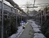 Lawn & Garden in Winter -  Walmart