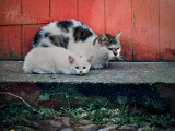 Cats resting