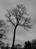 #5 Trees