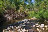 Avon 69  5243 East fork of Little Bear River